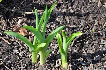 Spring Garden Sprouts Reklamní fotografie - 12900038