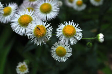 Small White Wildflowers Reklamní fotografie