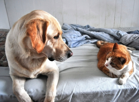 animals together: Dog and Cat Look at Each Other Stock Photo