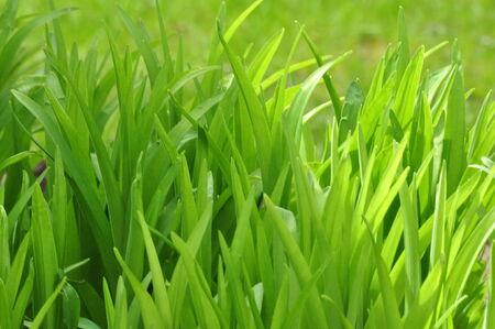 Background of Green Foliage Reklamní fotografie