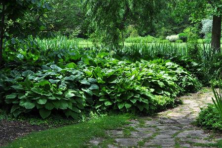큰 Hosta 식물을 특색 짓는 식물원