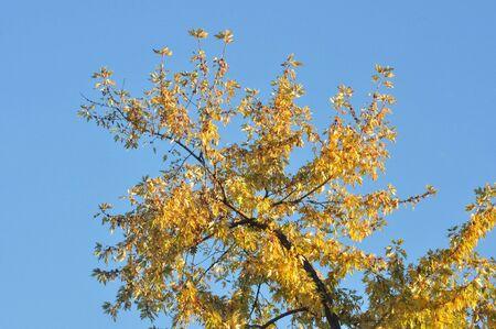 Autumn Colors Reklamní fotografie - 33010030