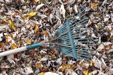 Fallen Leaves and a Garden Rake Stock Photo