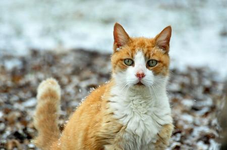 오렌지 얼룩 고양이