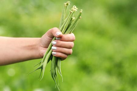 long bean: fresh green beans in hand Stock Photo
