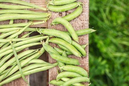 long bean: fresh harvest of green beans and green peas