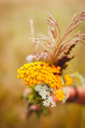 the ladybug bouquet of wildflowers on brown background