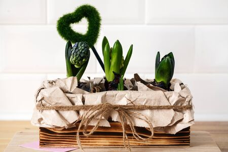young hyacinths in a wooden box Stock Photo