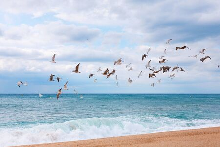 a flock of seagulls flies over the beach and the waves. Horizontal Фото со стока