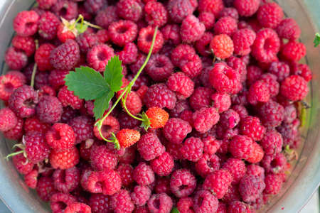 large plate with ripe raspberries