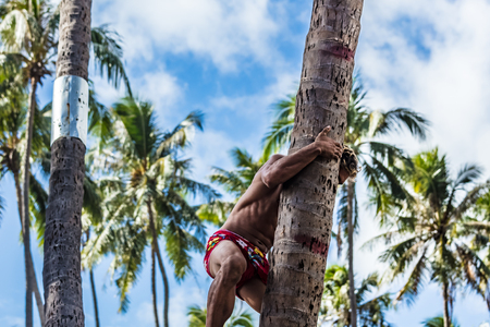 climbing coconut tree Banque d'images