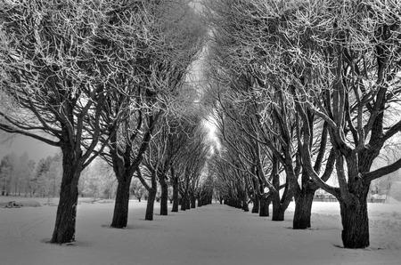 winter finland: Winter shot from Vuorela Disc Golf Course, Finland