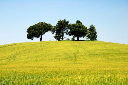 arbres sur la colline Banque d'images