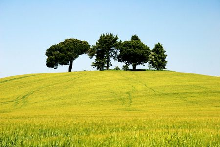 trees on the hill Stock Photo - 929151