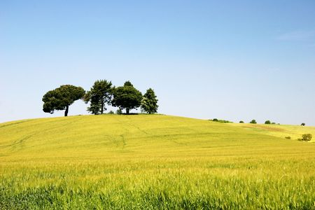 Arbres sur la colline
