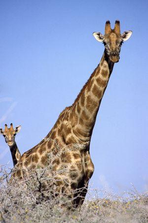 NAMIBIA Stock Photo - 929211