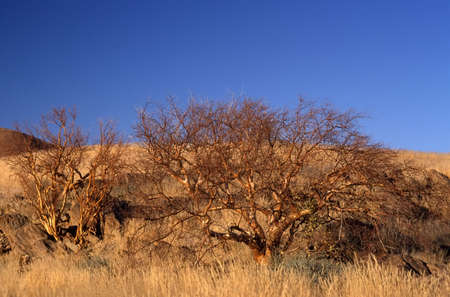 a landscape of the namibian nature