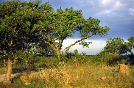 natura: NATURA - NATURE