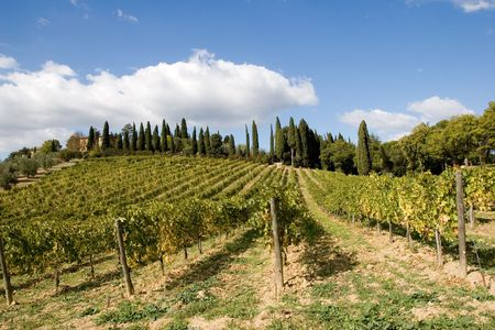 vineyard plain: tuscany sky