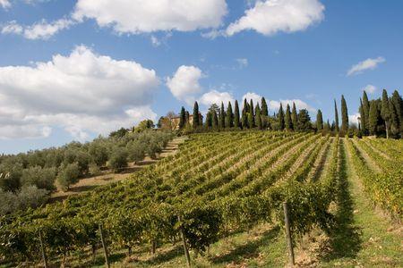 tuscany vineyard Stock Photo - 1944487