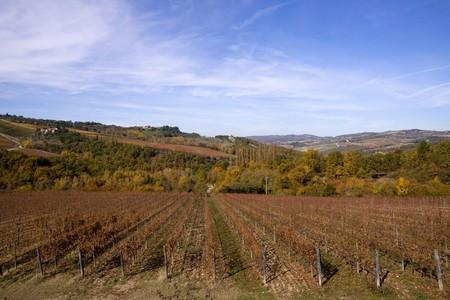 vineyard plain: tuscany nature Stock Photo
