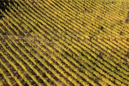 tuscany nature Stock Photo - 6925404