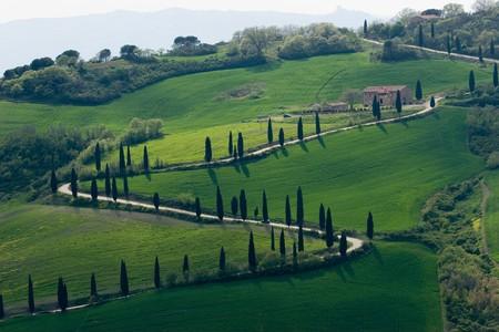vineyard plain: tuscany