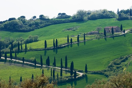 vineyard plain: tuscany