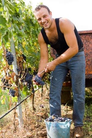 harvesting photo