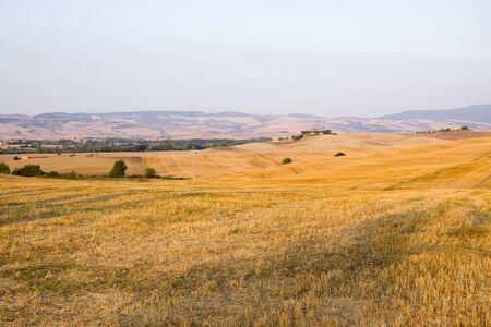 vineyard plain: Val dOrcia area