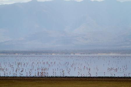 lake manyara photo