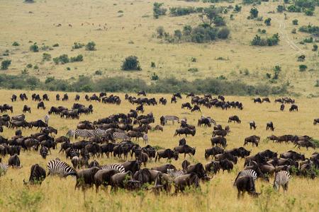 maasai mara: Riserva Nazionale di Masai Mara