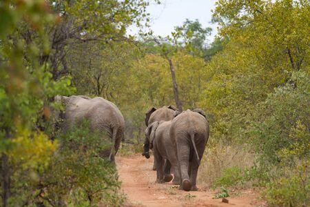 herbivore natural: elephants
