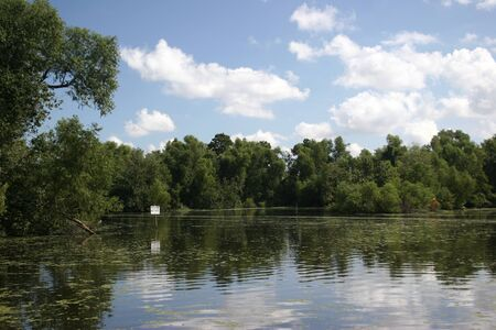 bayou swamp: lousiana bayou swamp