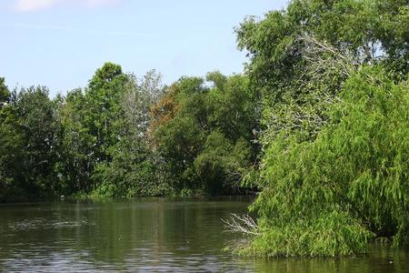 bayou: lousiana bayou swamp