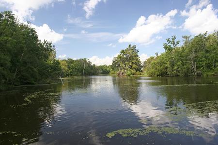 unaffected: lousiana bayou swamp