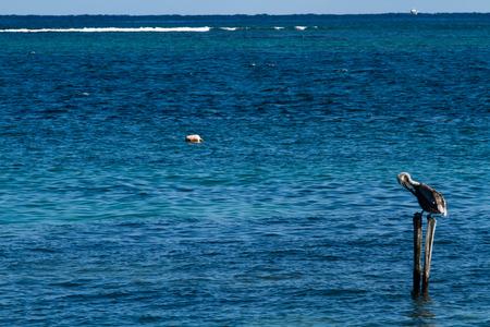 morelos: mexican riviera in puerto morelos in mexico Stock Photo