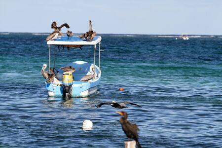 riviera: mexican riviera birds in the sea