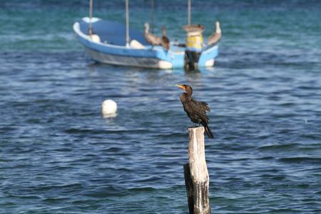 morelos: mexican riviera in puerto morelos mexico