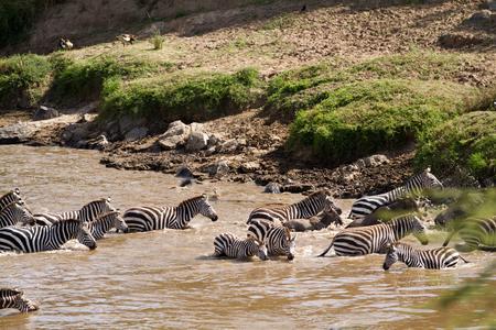 migration: masai mara during the migration season Stock Photo