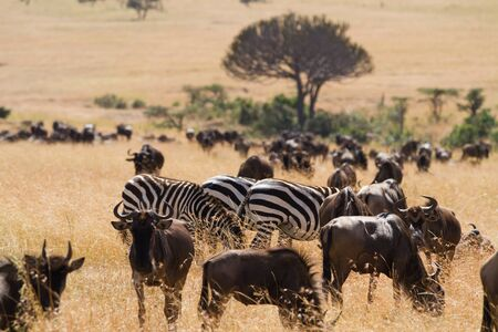 animales salvajes masai mara