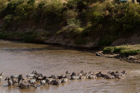 migration season in the masai mara Stock Photo
