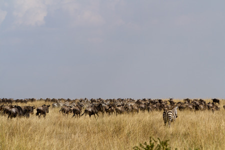 masai mara migration animals