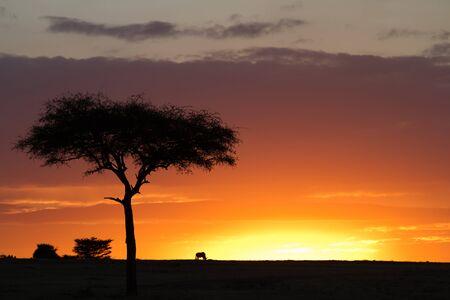 the mara: masai mara sunset