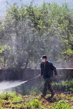 pesticide: farmer using pesticide Stock Photo