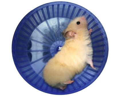 cute hamster: Hamster in a wheel over white background