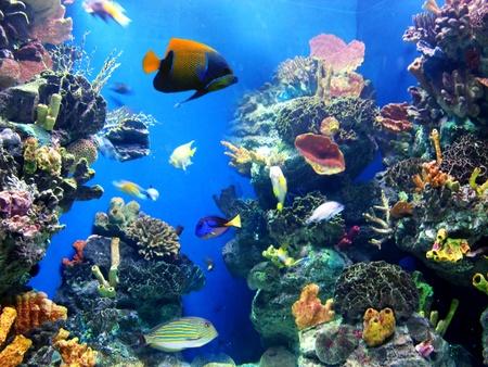 peces de acuario: Acuario de colorido, mostrando diferentes peces coloridos nataci�n
