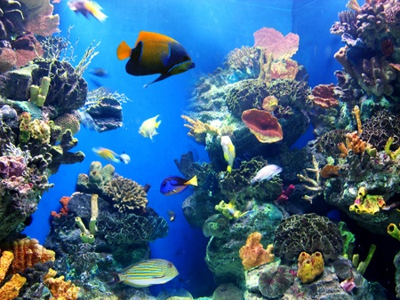 aquarium: Colorful aquarium, showing different colorful fishes swimming Stock Photo