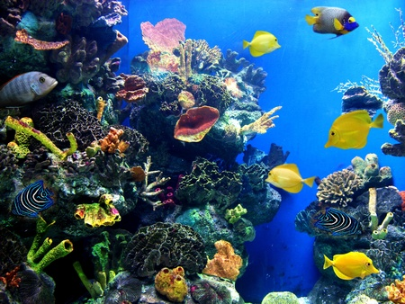 marine environment: Colorful aquarium, showing different colorful fishes swimming Stock Photo