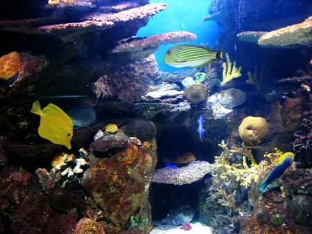 Colorful aquarium, showing different colorful fishes swimming Stock Photo - 9295943